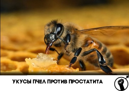 Укусы пчел против простатита