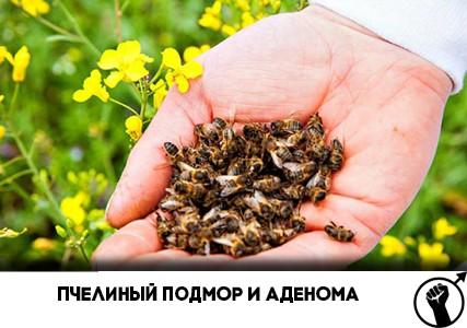 пчелиный подмор и аденома